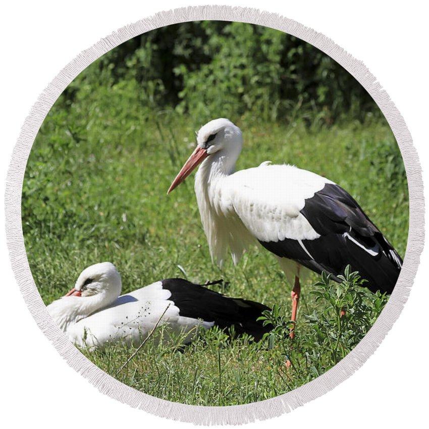 Bird Round Beach Towel featuring the photograph White Storks by Teresa Zieba