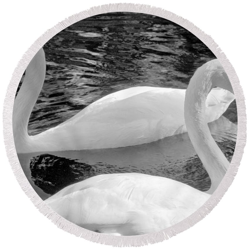 Swan Round Beach Towel featuring the photograph White Swans by David Lee Thompson
