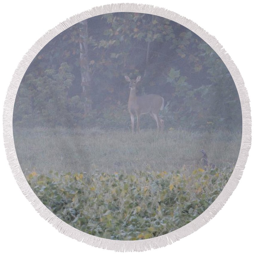 Deer Round Beach Towel featuring the photograph White Tail Deer by David Irwin