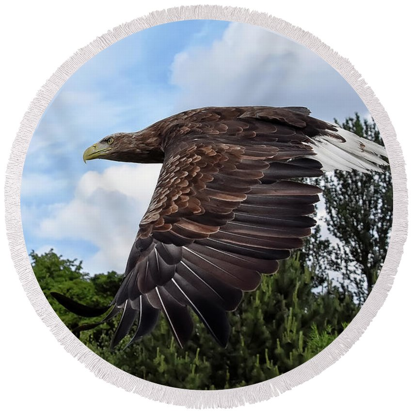 Sea Eagle Round Beach Towel featuring the photograph White Tailed Eagle by Kuni Photography