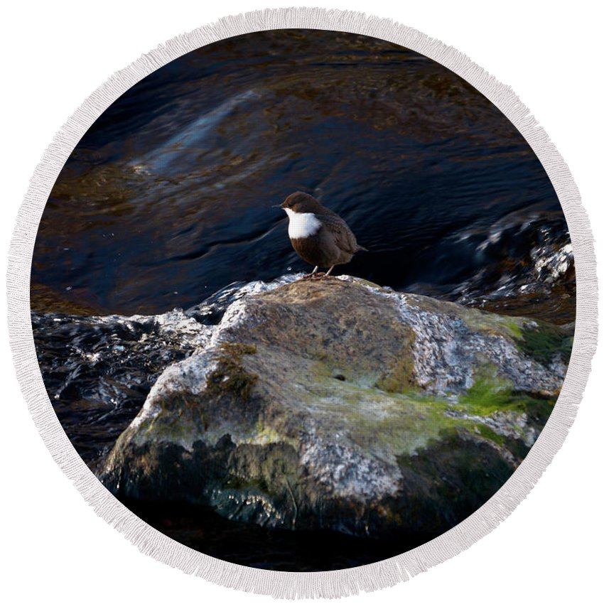 Lehtokukka Round Beach Towel featuring the photograph White-throated Dipper Nr 1 by Jouko Lehto