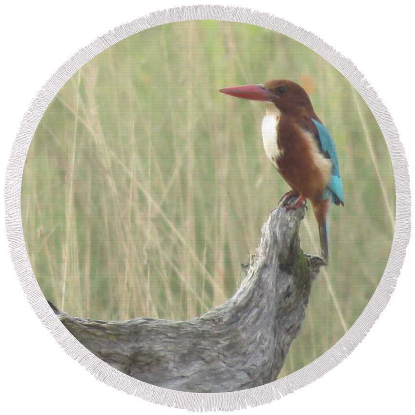 Wildlife Round Beach Towel featuring the photograph White Throated Kingfisher by Mikhael van Aken