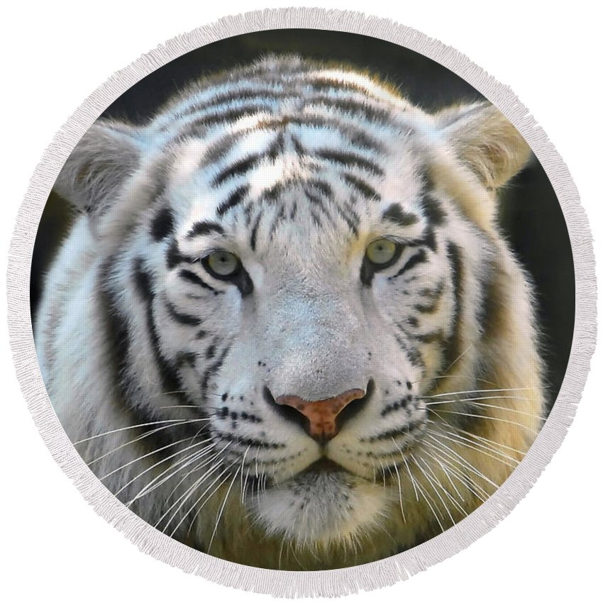 White Tiger Round Beach Towel featuring the photograph White Tiger by David Lee Thompson