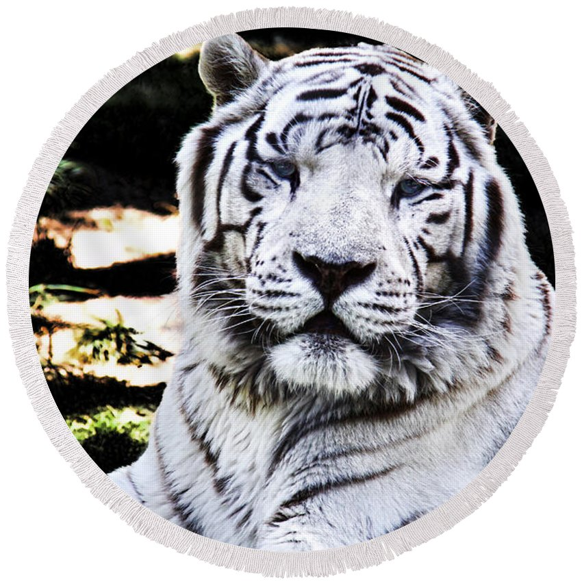 Mariola Round Beach Towel featuring the photograph White Tiger by Mariola Bitner