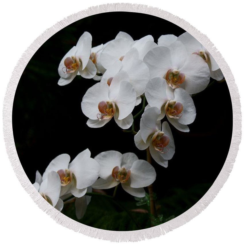 Phylanopsis Orchid Round Beach Towel featuring the photograph White Velvet by Joanne Smoley