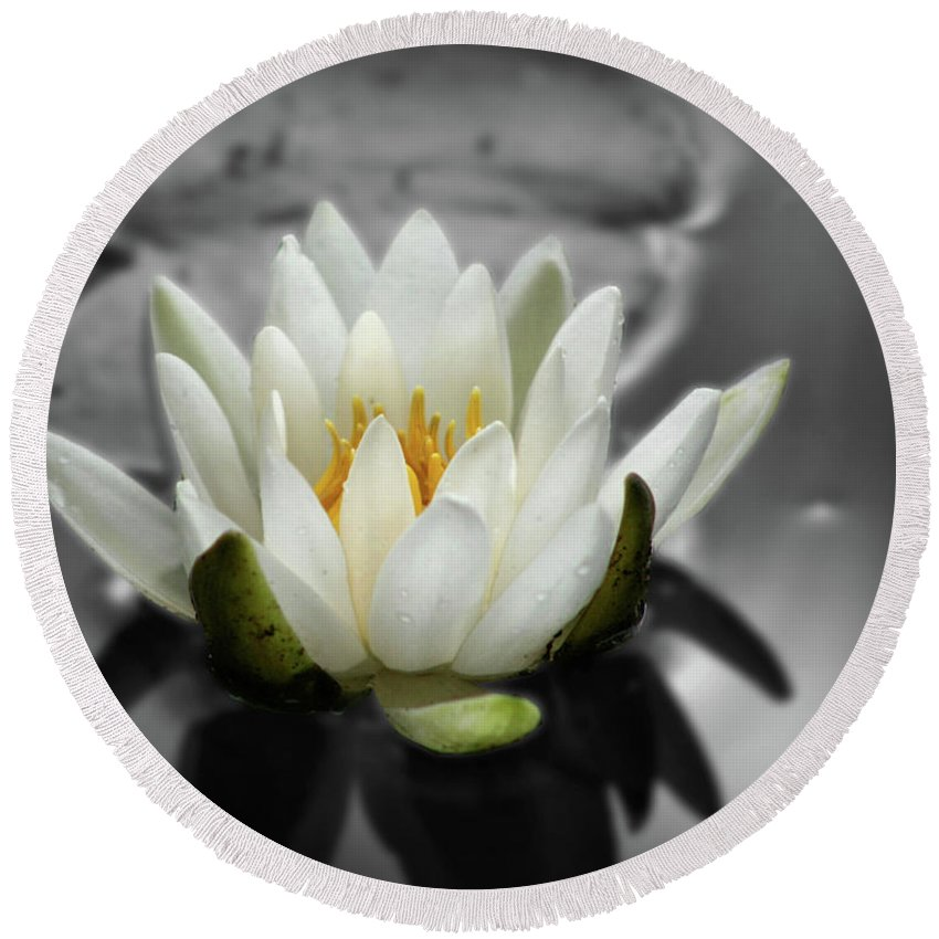 Lotus Round Beach Towel featuring the photograph White Water Lily Black And White by Smilin Eyes Treasures
