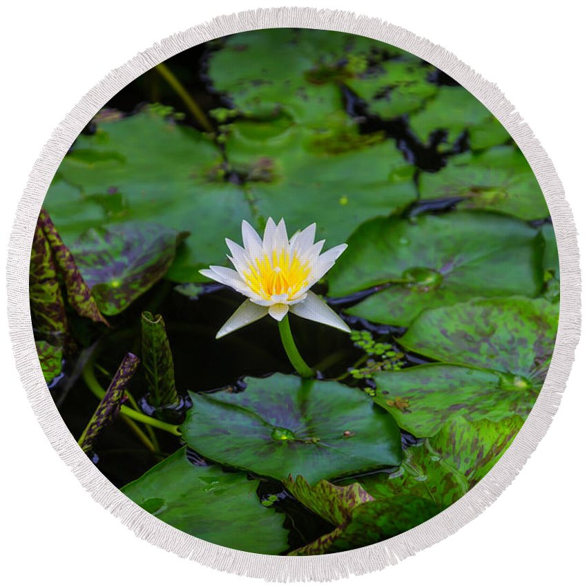 White Round Beach Towel featuring the photograph White Water Lily by Garry Gay