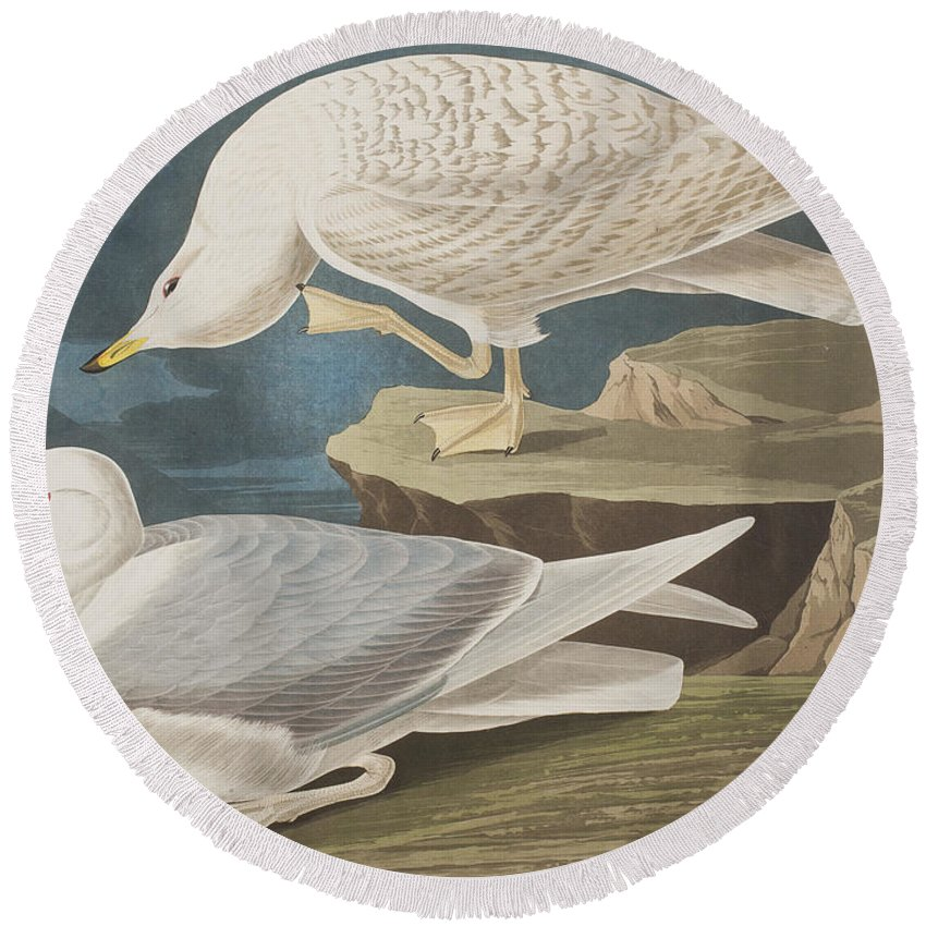 White Round Beach Towel featuring the painting White-winged Silvery Gull by John James Audubon