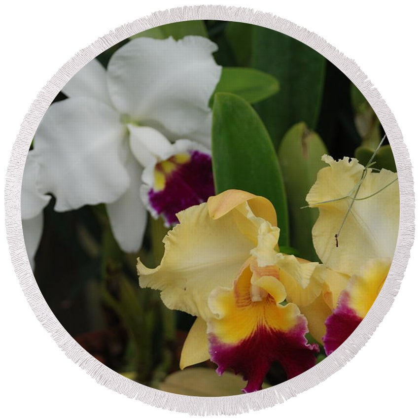 Macro Round Beach Towel featuring the photograph White Yellow Orchids by Rob Hans