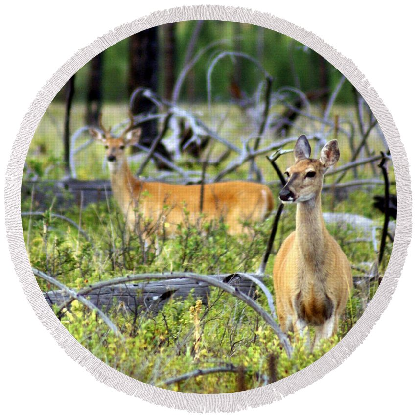 Deer Round Beach Towel featuring the photograph Whitetails by Marty Koch