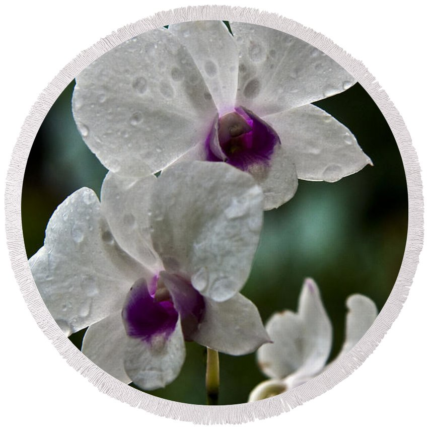 Flower Round Beach Towel featuring the photograph Whte Orchids by George Cabig