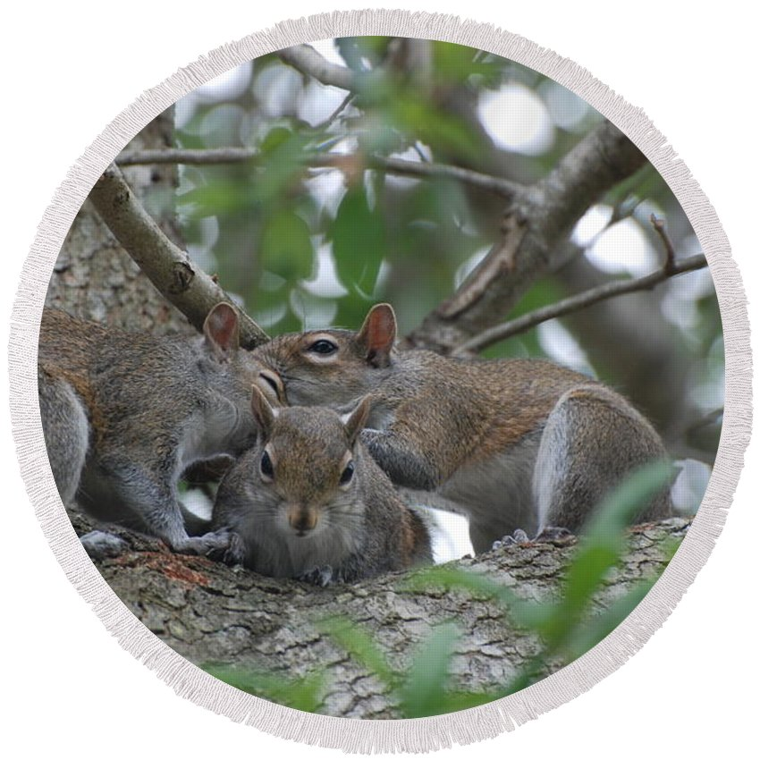 Squirrel Round Beach Towel featuring the photograph Why Me by Rob Hans