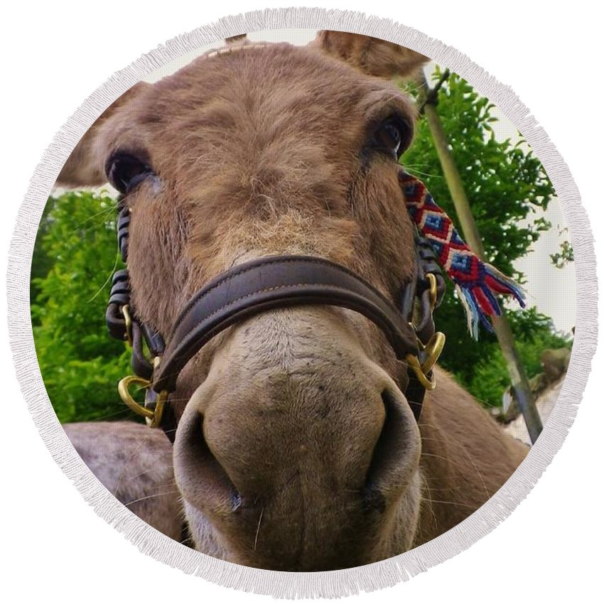 Donkey Round Beach Towel featuring the photograph Why The Long Face? by Richard Brookes
