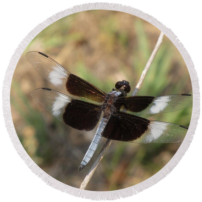 Dragonfly Round Beach Towel featuring the photograph Widow Skimmer Dragonfly Male by Donna Brown