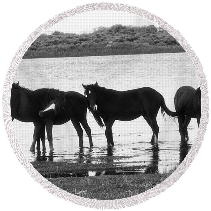 Horse Round Beach Towel featuring the photograph Wild At Twilight by Terry Fiala