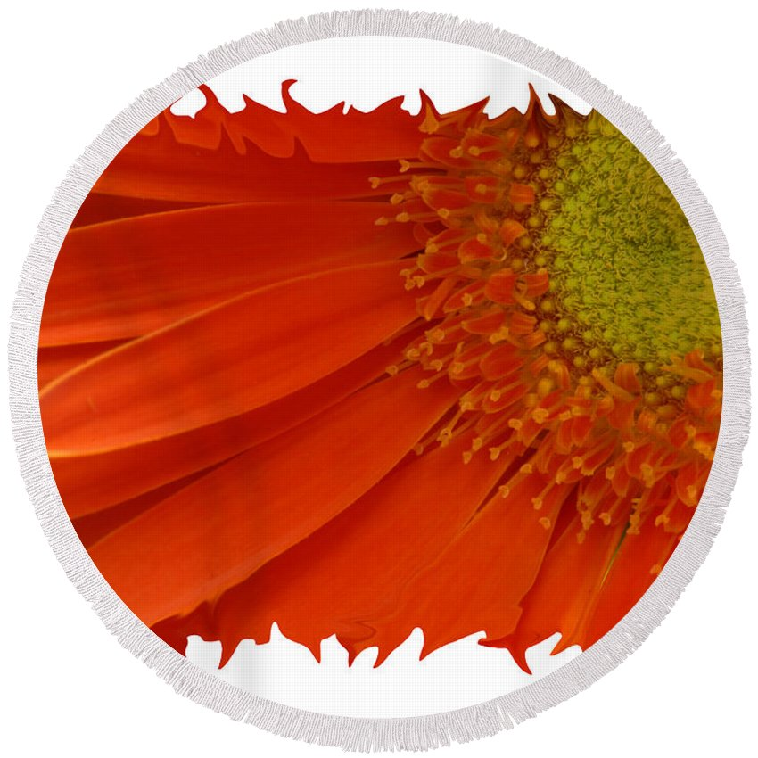 Gerber Daisy Orange Yellow Digital Art Photograph Photography Photographer Flower Plant Nature Round Beach Towel featuring the photograph Wild Daisy by Shari Jardina