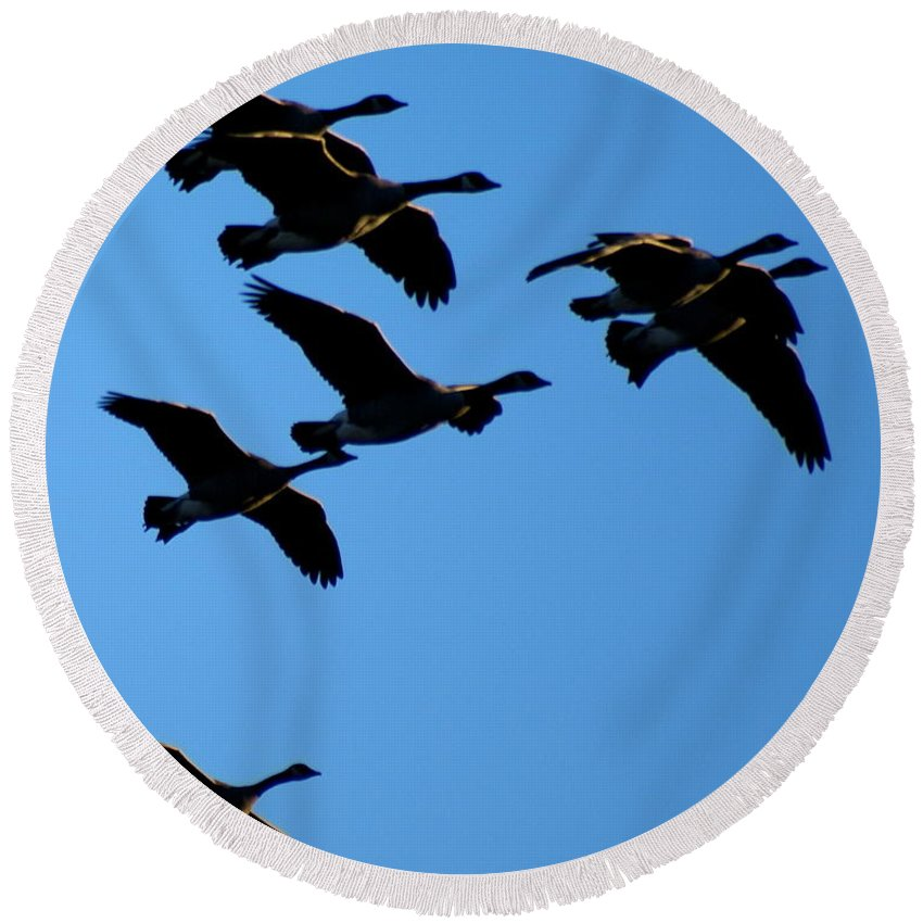 Spokane Round Beach Towel featuring the photograph Wild Geese In The West by Ben Upham III