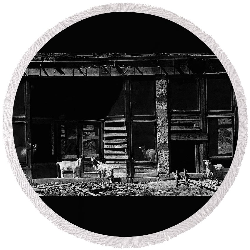 Wild Goats Ghost Town White Oaks New Mexico 1968 Round Beach Towel featuring the photograph Wild Goats Ghost Town White Oaks New Mexico 1968 by David Lee Guss