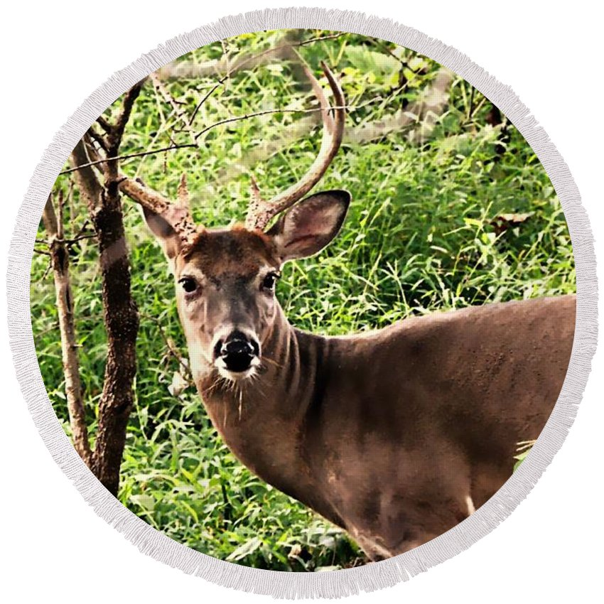 Deer Round Beach Towel featuring the photograph Wild In The Country by Tami Quigley