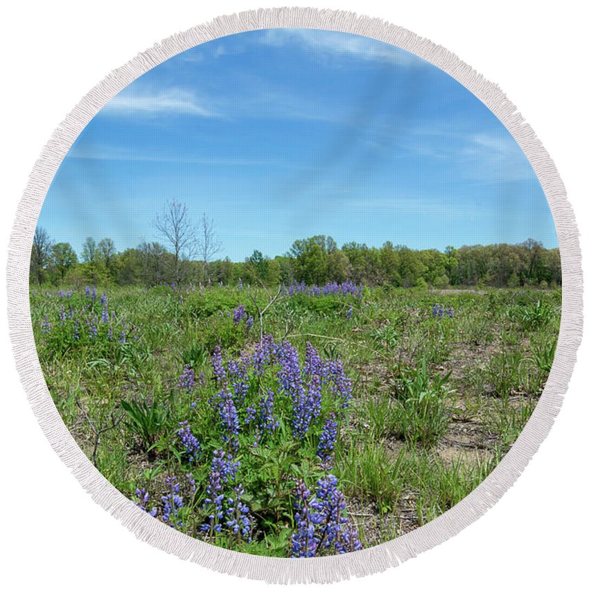 Lupinus Perennis Round Beach Towel featuring the photograph Wild Lupine by Michael Shake