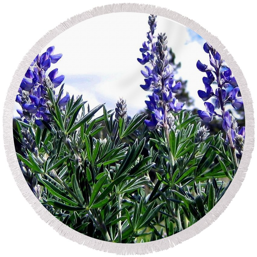 Lupines Round Beach Towel featuring the photograph Wild Lupines by Will Borden