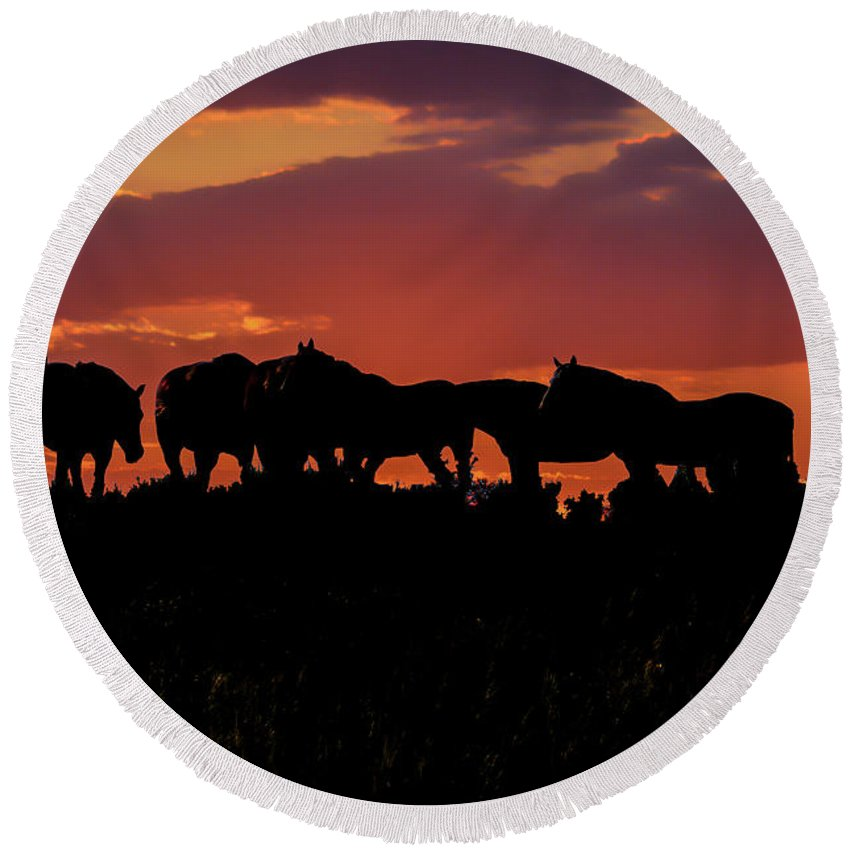 Horses Round Beach Towel featuring the photograph Wild Mustangs At Sunset by Tommy Anderson