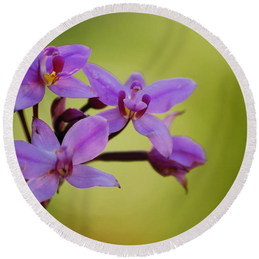 Wildflower Round Beach Towel featuring the photograph Wild Orchids 2 by Michael Peychich