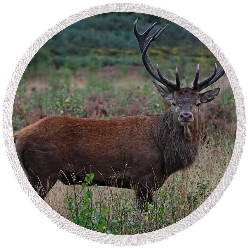 Antlers Round Beach Towel featuring the photograph Wild Red Deer Stag by Mickey At Rawshutterbug