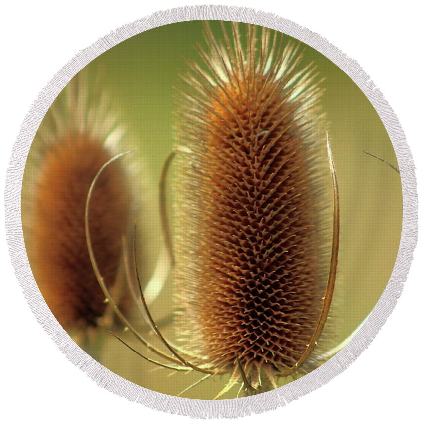 Teasel Round Beach Towel featuring the photograph Wild Teasel by Bruce Patrick Smith