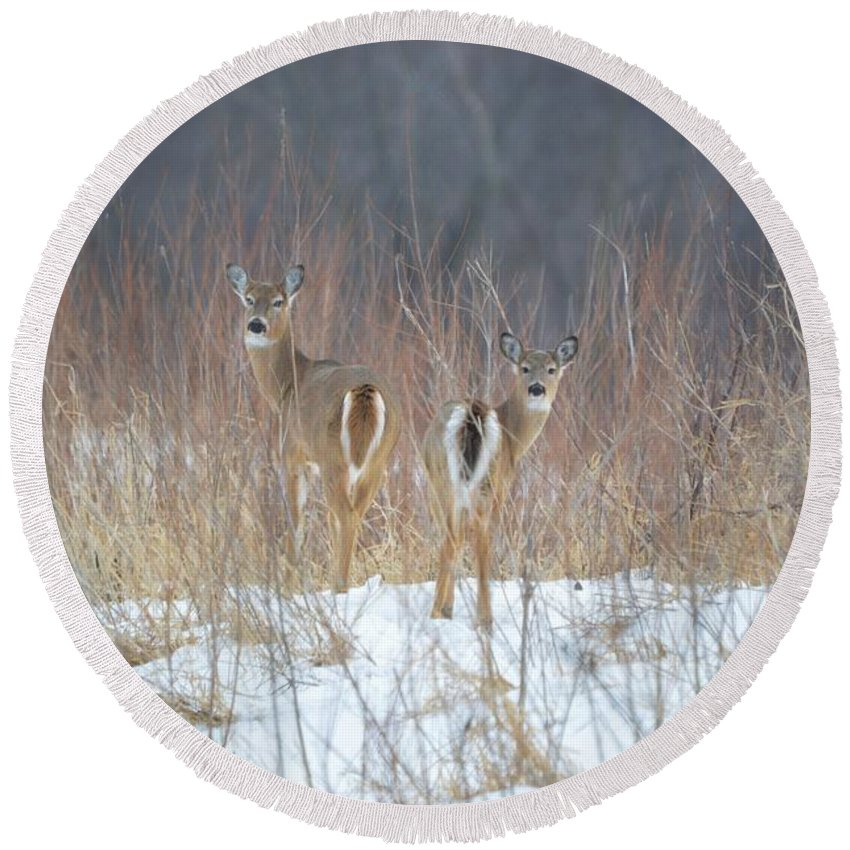 Deer Round Beach Towel featuring the photograph Wild Winter by Bonfire Photography