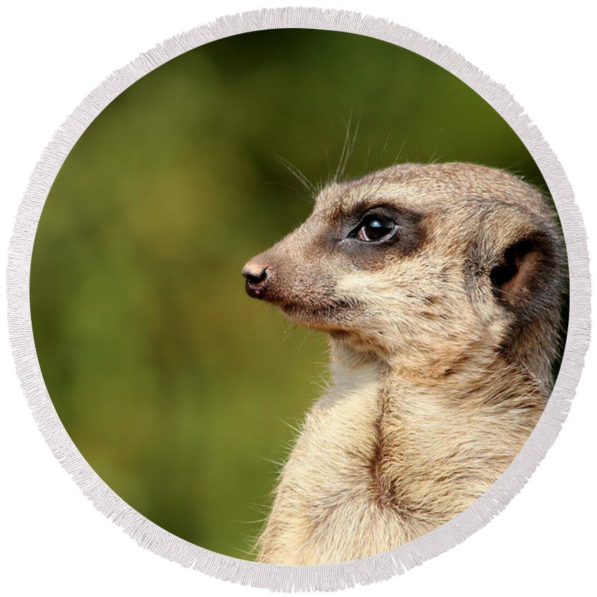 Meerkat Round Beach Towel featuring the photograph Wildlife Observation by Heike Hultsch