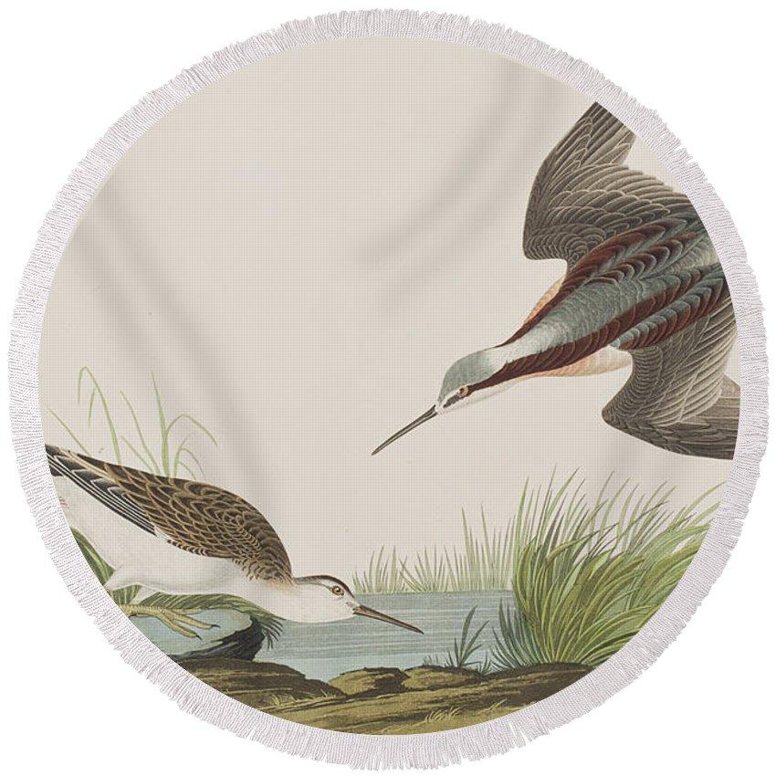 Plate 254 Round Beach Towel featuring the painting Wilson's Phalarope by John James Audubon