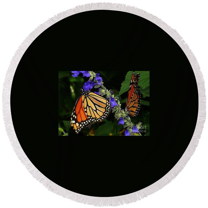 Butterfly Round Beach Towel featuring the photograph Winged Life by Lydia Holly