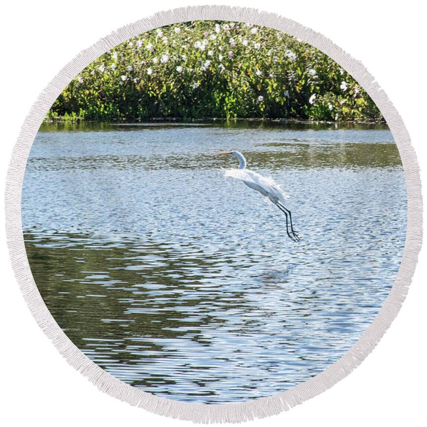 Egret Round Beach Towel featuring the photograph Wings Aloft by Tom Horsch Photography
