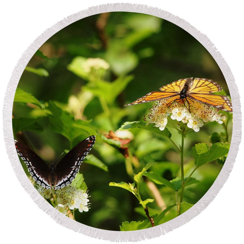 Butterfly Round Beach Towel featuring the photograph Wings And Blooms by Debbie Oppermann