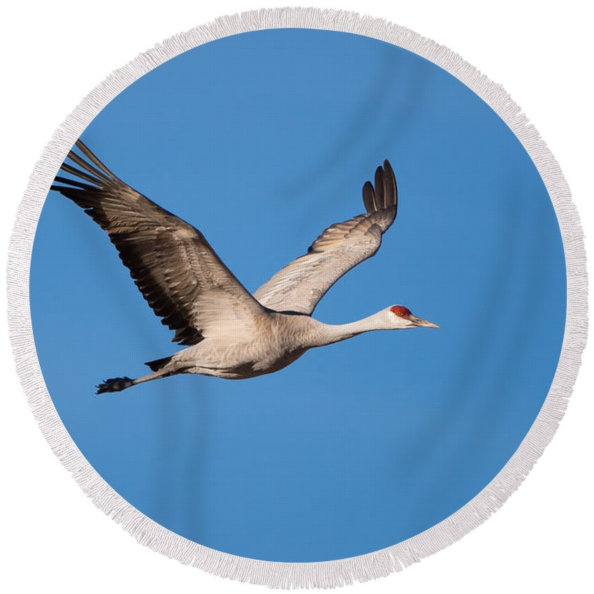 Monte Vista Round Beach Towel featuring the photograph Wings Up by David F Hunter