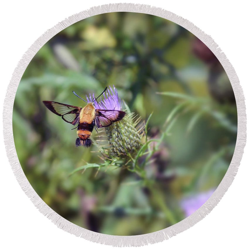 Hummingbird Moth Round Beach Towel featuring the photograph Wings You Can See Through by Kerri Farley