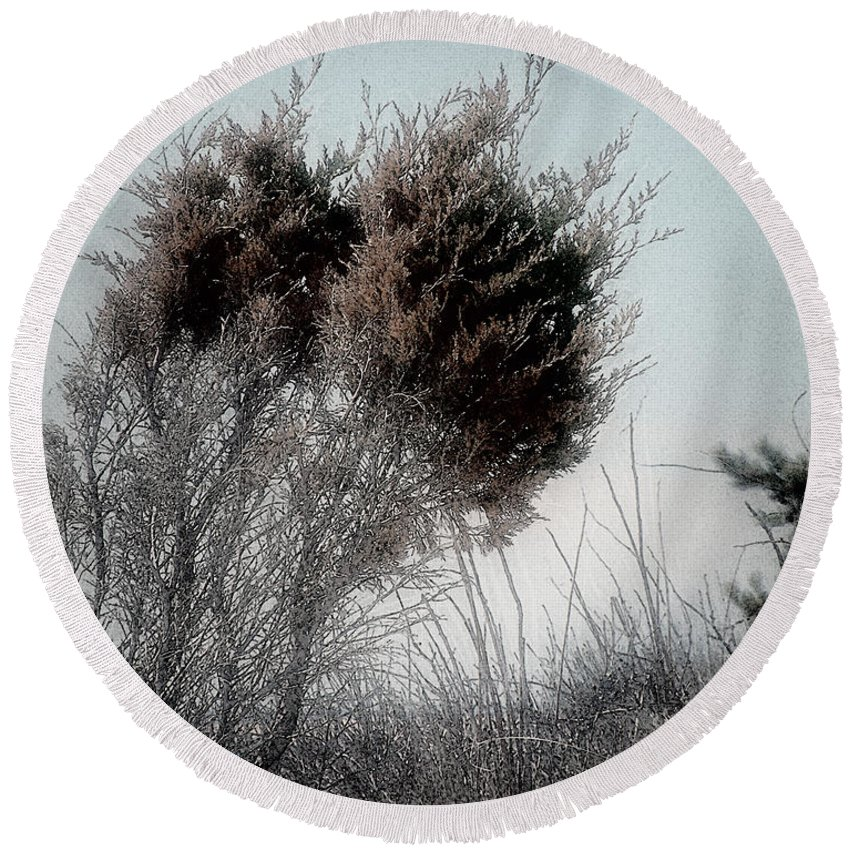 Beach Round Beach Towel featuring the painting Winter Cedar by RC DeWinter