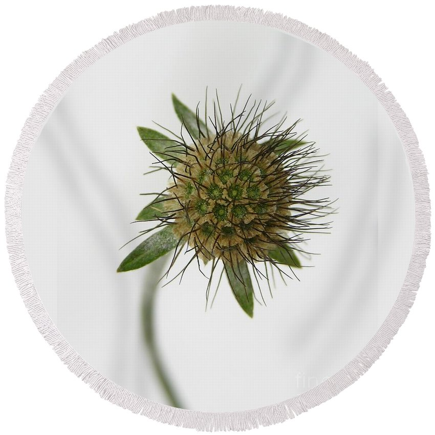 Nature Round Beach Towel featuring the photograph Winter Pin Cushion Plant by Carol Groenen
