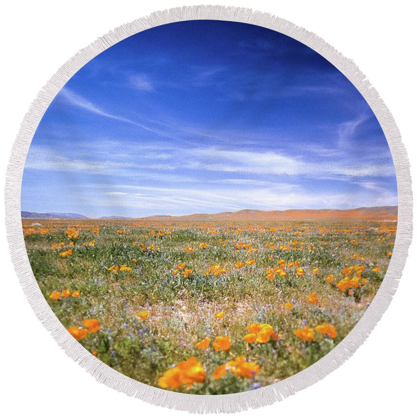 Wildflowers Round Beach Towel featuring the photograph Winter Rainfall by Jerry Sellers