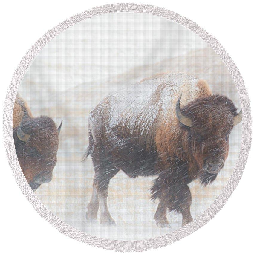 Buffalo Round Beach Towel featuring the photograph Winter Storm by Derald Gross