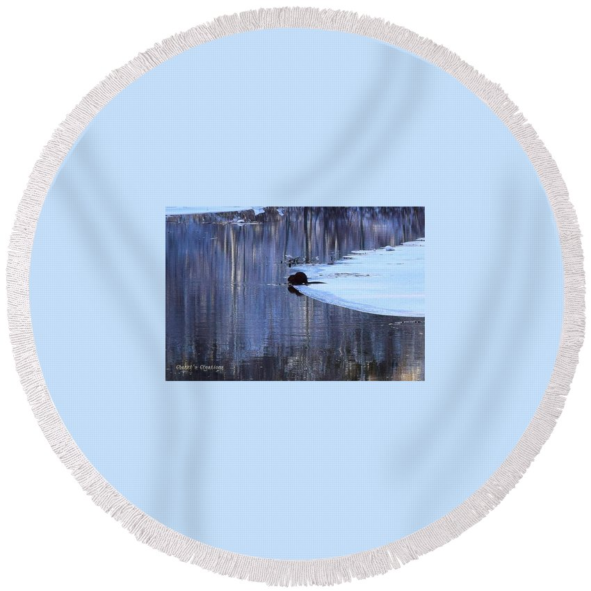 Beaver Round Beach Towel featuring the photograph Winter Wildlife In New England by Cheryl Braley