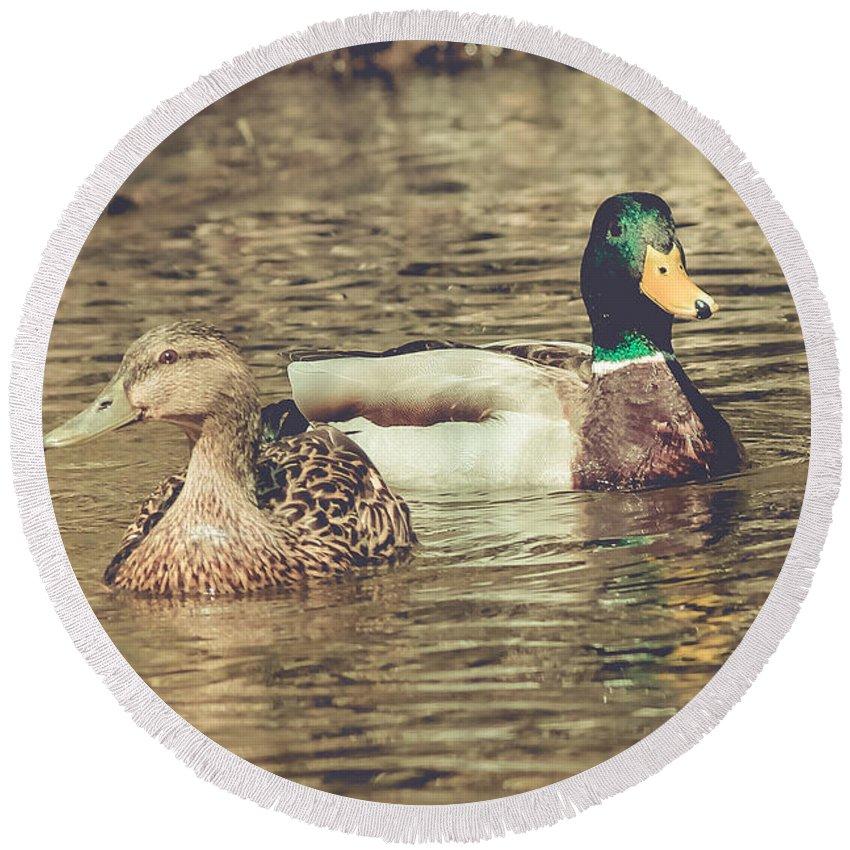 Ducks Round Beach Towel featuring the photograph Wisconsin Ducks by Viviana Nadowski