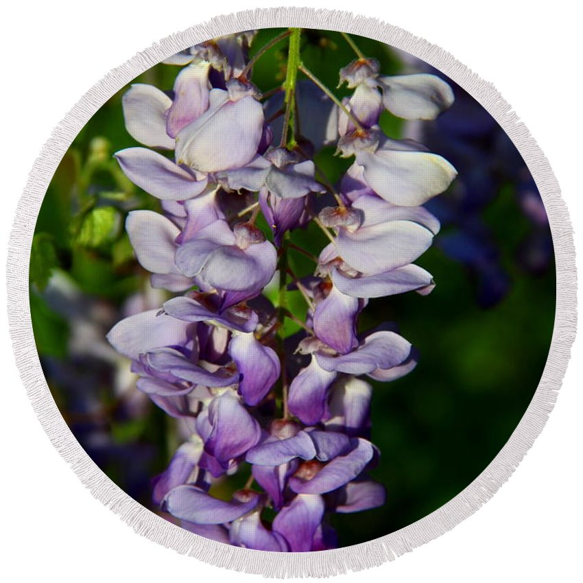 Wisteria Round Beach Towel featuring the photograph Wisteria Bloom by Barbara Bowen