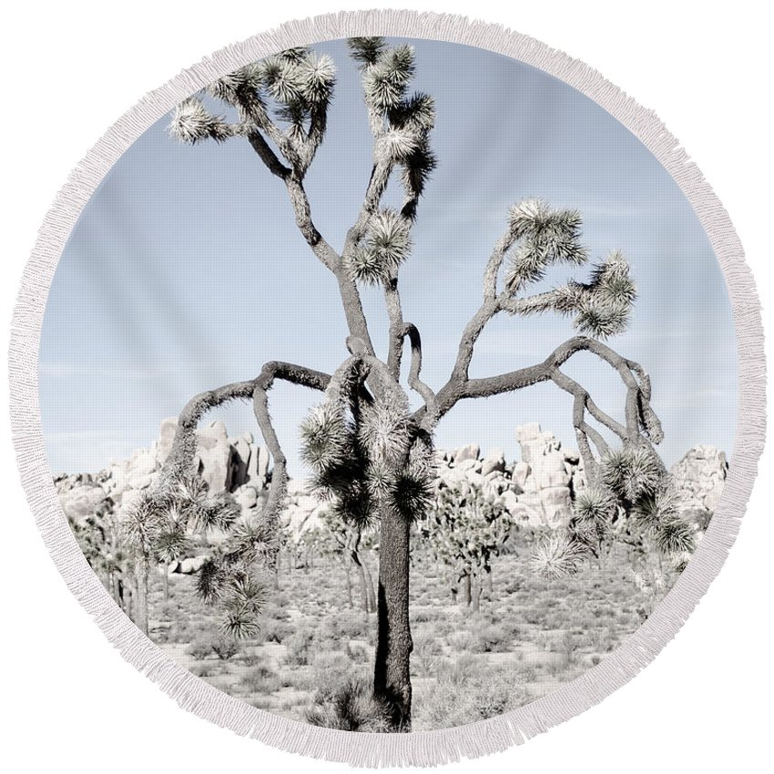 Joshua Tree Round Beach Towel featuring the photograph Withering Joshua Tree by Alex Snay