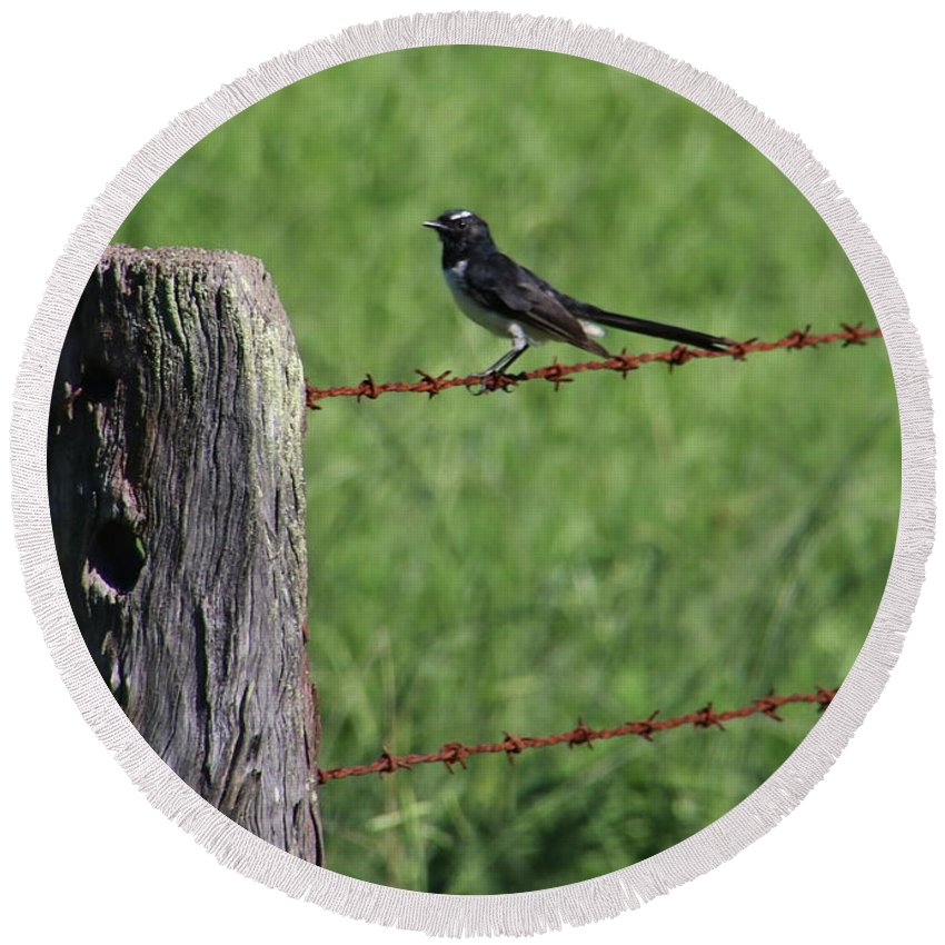Wilflife Round Beach Towel featuring the photograph Willie Wagtail by Mikhael van Aken