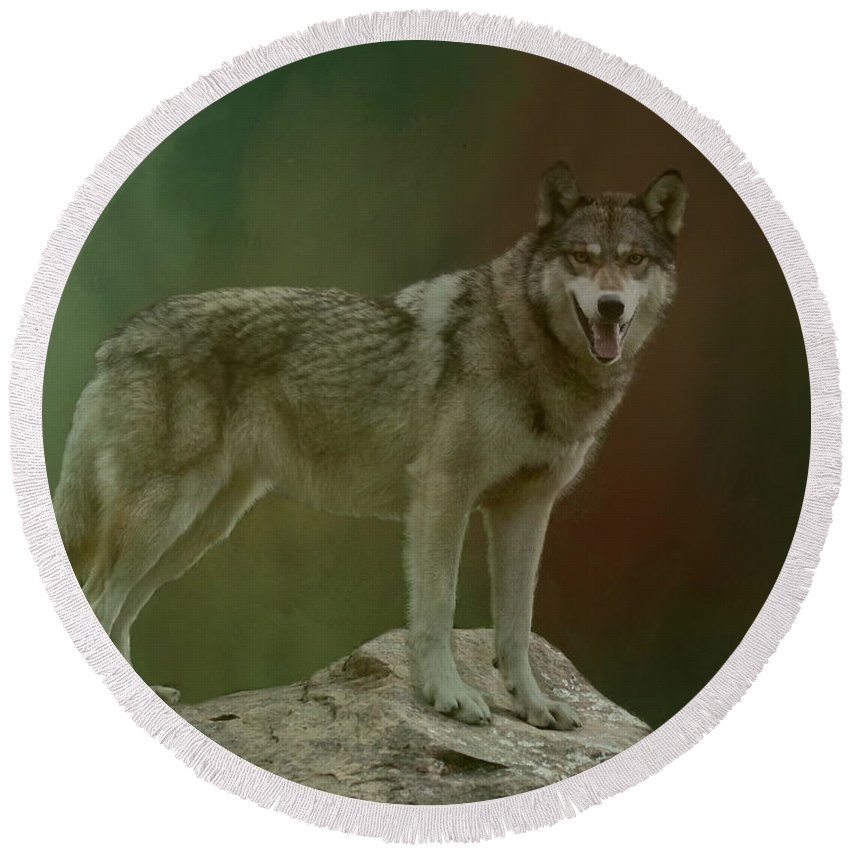 Wolf Round Beach Towel featuring the photograph Wolf 0n Look-out by Myrna Bradshaw