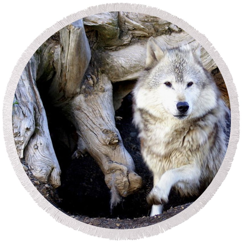 Wolf Round Beach Towel featuring the photograph Wolf Den 1 by Marty Koch