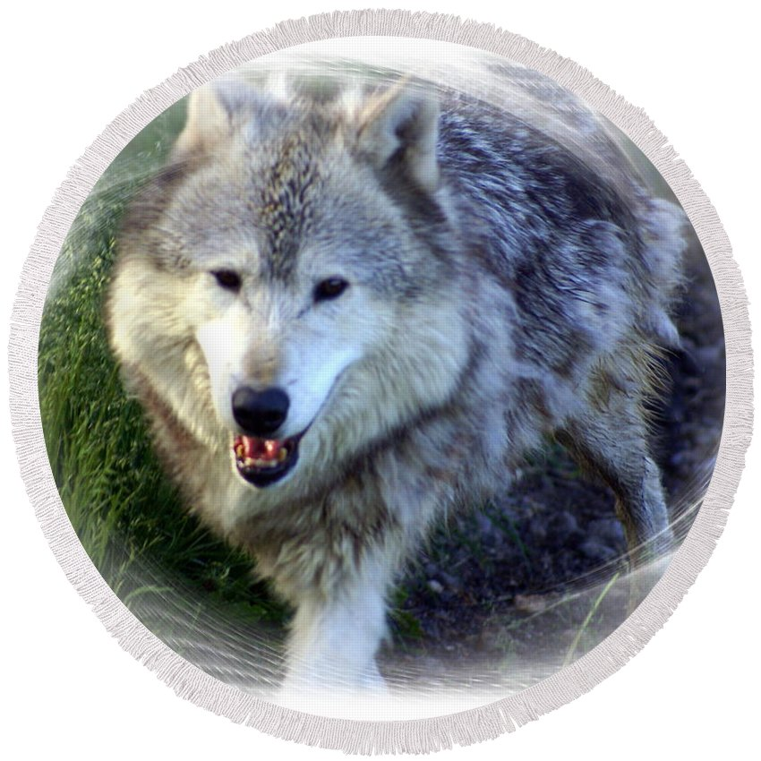 Wolf Round Beach Towel featuring the photograph Wolf by Marty Koch