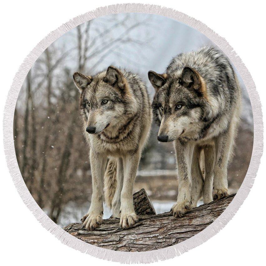 Wolf Wolves Animal Wildlife Mammal Photography Photograph Canis Lupis Grey Timberwolf Round Beach Towel featuring the photograph Wolf Pair by Shari Jardina